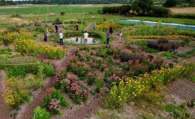 Stage Jardin Mandala