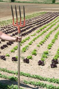 L'agriculture française redevient celle d'un  pays féodal et sous développé