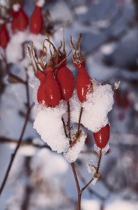 Que faire en hiver dans son jardin bio?